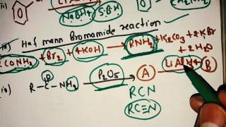 Amine nitrogen containing compound revision in hindi
