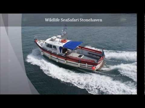 Castle Charters - Boat Trips Stonehaven Www.CastleCharter.co.uk