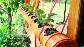 кЛУБНИКА в ТРУБЕ ПВХ 200 мм. Посадка клубники в трубу ПВХ. Strawberry in pvc pipe