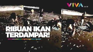 Download Video Ribuan Ikan Terdampar di Pantai, Pertanda Gempa Bali?? MP3 3GP MP4