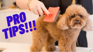 BRUSHING YOUR DOG AT HOME: TUTORIAL