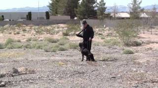 Retriever Dog Training Alone With Thunder 100 Launcher