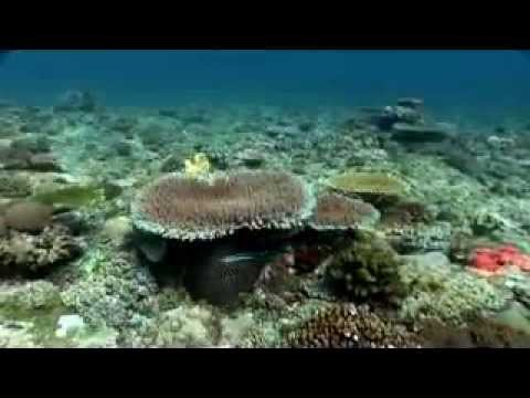 Exploring The Eastern Outer Atoll