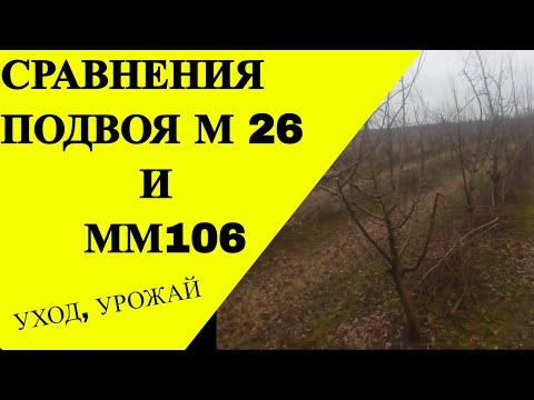 Урожайный сад  Подвой М26 или ММ106
