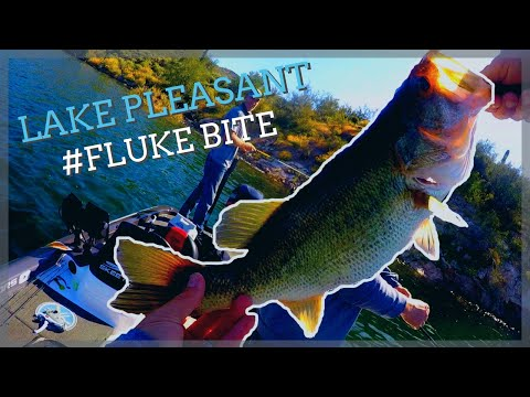 Fishing Lake Pleasant AZ I Fluke Bite Is On!!