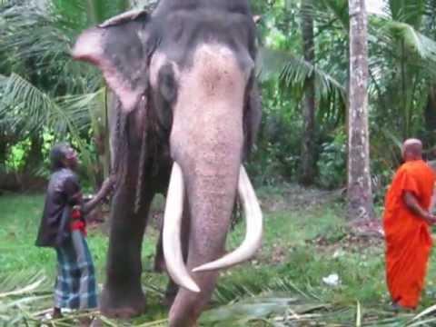 Sri lanka wasana - 1 10