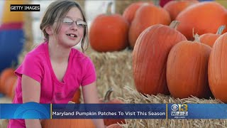 Maryland Pumpkin Patches To Visit This Season