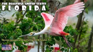 USA Florida State Symbols/Beautiful Places/Song SWANEE RIVER w…