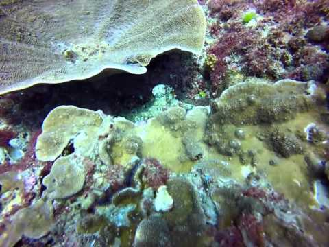Go Dive Videos | Go Dive Brisbane at Shag Rock 7th Feb 2015