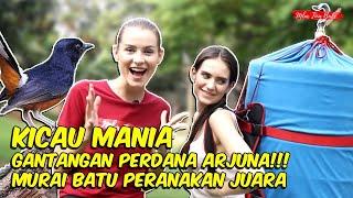 Download lagu BULE VIRAL IKUT GANTANGAN MURAI BATU DAN JUARA !!!