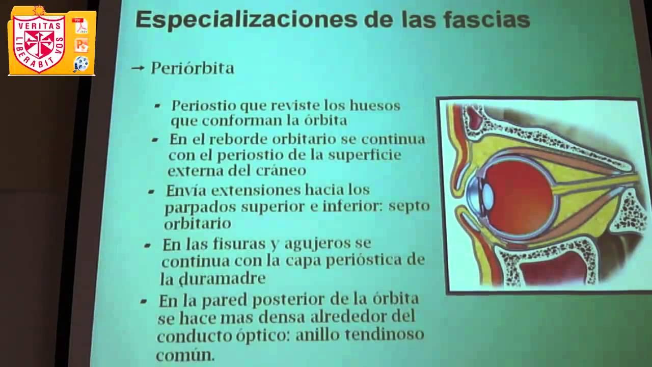 Anatomía - Fosa Nasal y Orbitaria - YouTube