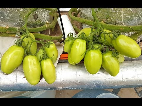 Hydroponic Greenhouse Update March 2019-Climate Controlled Greenhouse Karachi, Pakistan