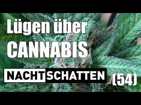 Lügen über Cannabis | Nachtschatten Television (54)