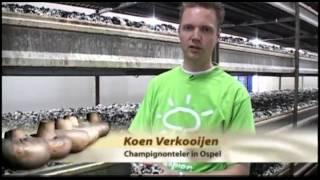 Niderlandzkie pieczarki