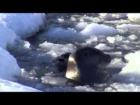 Arctic Ocean Climate Change Impacts
