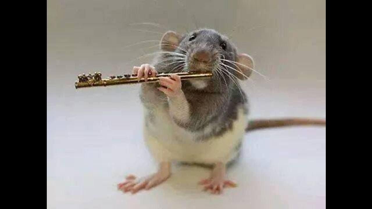Картинки про смешных крыс, кружку прикольные