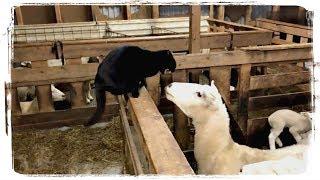ПРИКОЛЫ С ЖИВОТНЫМИ   FUN WITH ANIMALS #440
