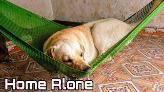 Đừng bao giờ bỏ mặc chú cún 1 mình - Kim Chi Củ Cải | What happen when I left my dog home alone thumbnail