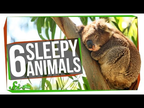 5 Animals That Sleep Too Much (and One That Might Not Need To)
