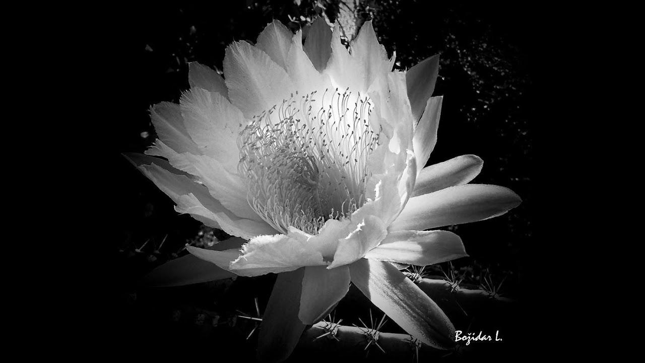CVIJECE 20.03.16 - Crno-bijela fotografija - YouTube
