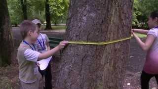 Czy na świecie są drzewa starsze od dinozaurów?
