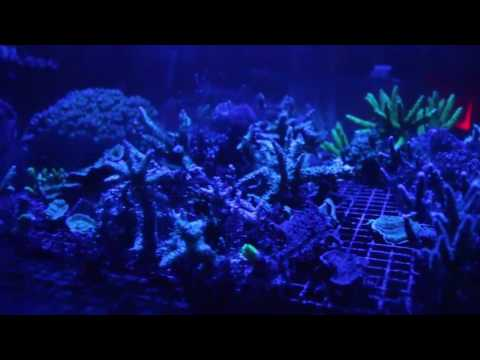Repeat Kessil A160WE LED Tuna Frag Tank (2 Month Update) by
