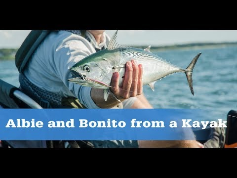 How To Catch Albies And Bonito From A Kayak