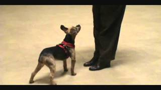 Clicker Training Basics - Getting Started With Clicker Training