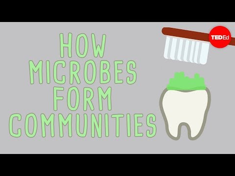Video image: The microbial jungles all over the place (and you) - Scott Chimileski and Roberto Kolter
