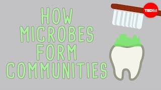 The Microbial Jungles All Over The Place (and You) - Scott Chimileski And Roberto Kolter