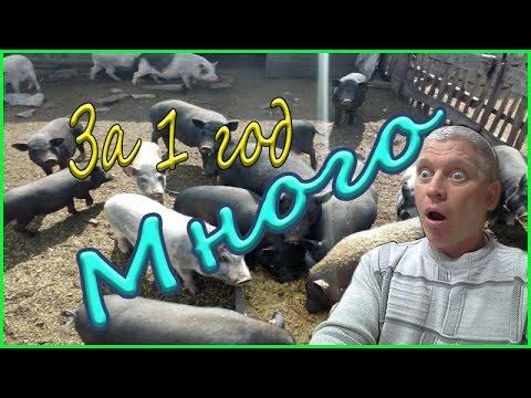 1 год с вьетнамскими свиньями. Результаты . Видео подборка.