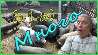 1 год содержания Вьетнамских свиней/ Результаты/Деревенская жизнь