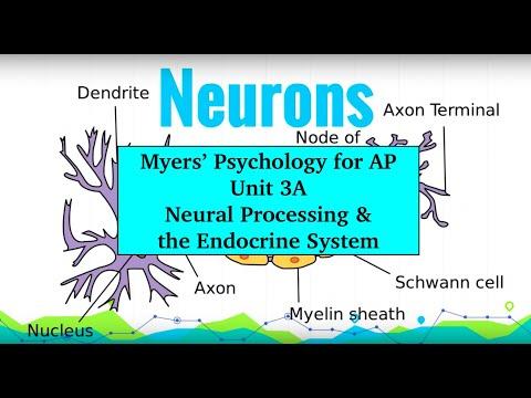 Unit 3A Myers' Psychology for AP - The Brain