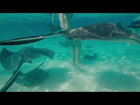 AIDA, AIDAmar, Karibik & Mittelamerika, Dezember 2016 | GoPro