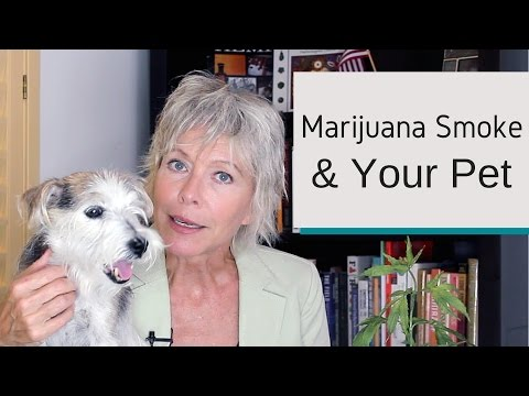 How Does Marijuana Smoke Affect Your Pet?