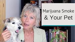 How Does Marijuana Smoke Affect Your Pet?