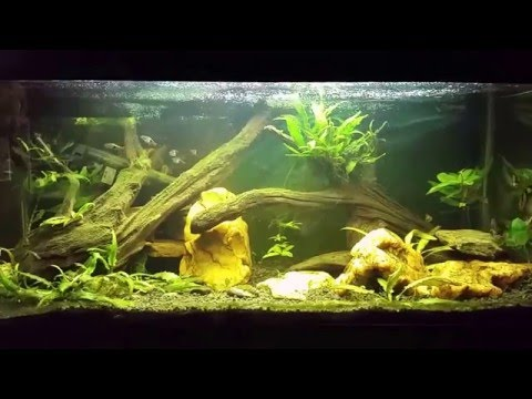 Water Change with H2O2 for Algae Control. Before and After