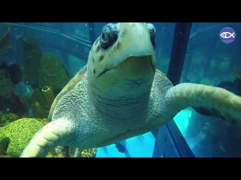 Virtual Visit: A Dive Inside The Giant Ocean Tank!