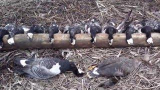 видео охота в архангельской области