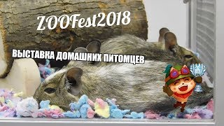 ZOOFEST 2018 | ВЫСТАВКА ДОМАШНИХ ЖИВОТНЫХ