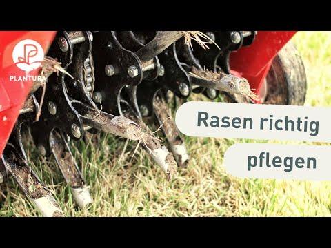Berühmt Rasen vertikutieren, lüften & sanden: Was ist wann am besten ZT42
