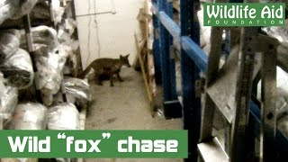 2 Guys, 2 GoPros, 1 Fox, and a massive warehouse!