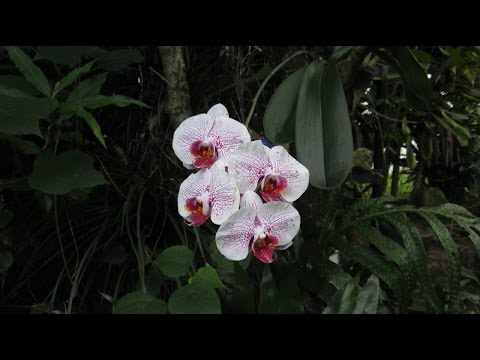 How Orchids Grow in Hawaii