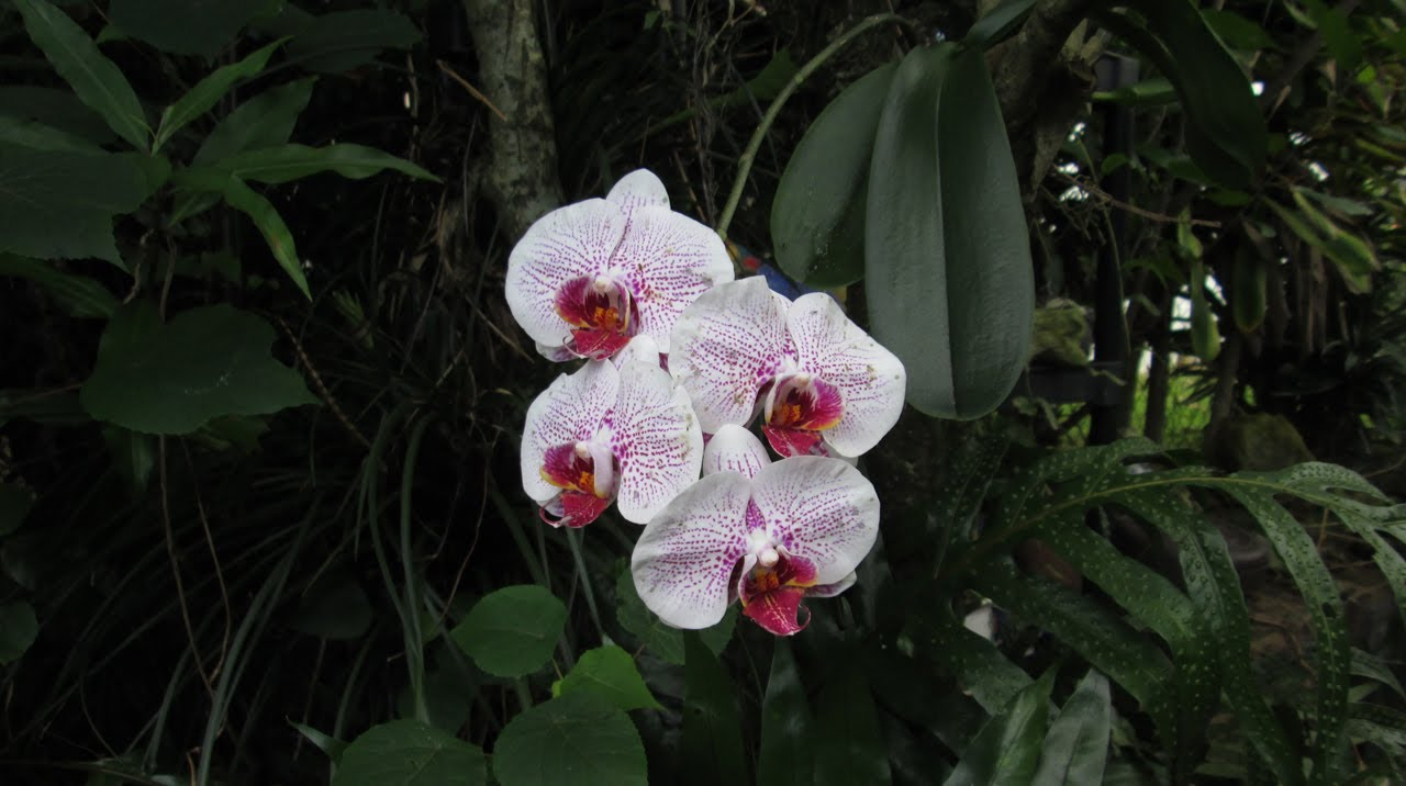 How Orchids Grow In Hawaii Youtube