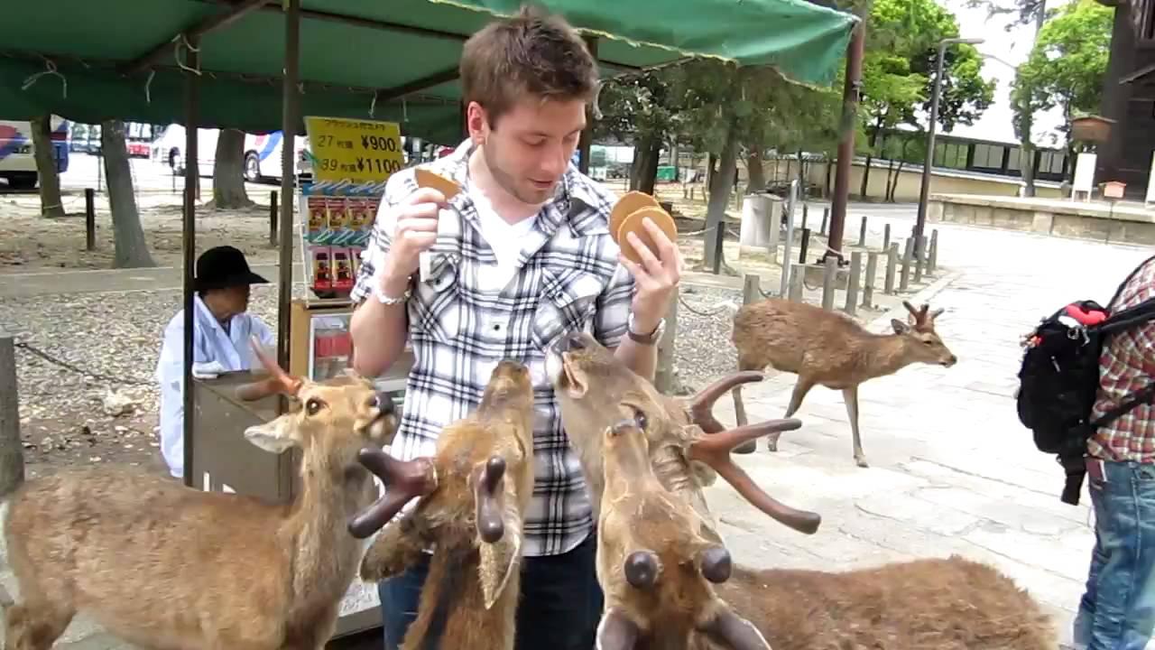 deers 4
