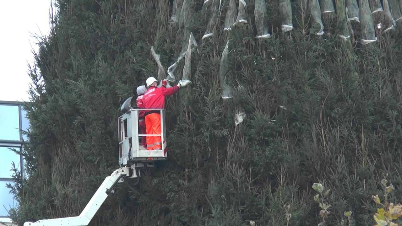 Dortmund Weihnachtsbaum.Weihnachtsbaum 2016 Dortmund