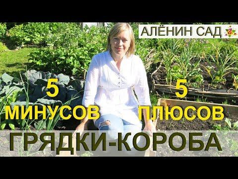 5 МИНУСОВ и