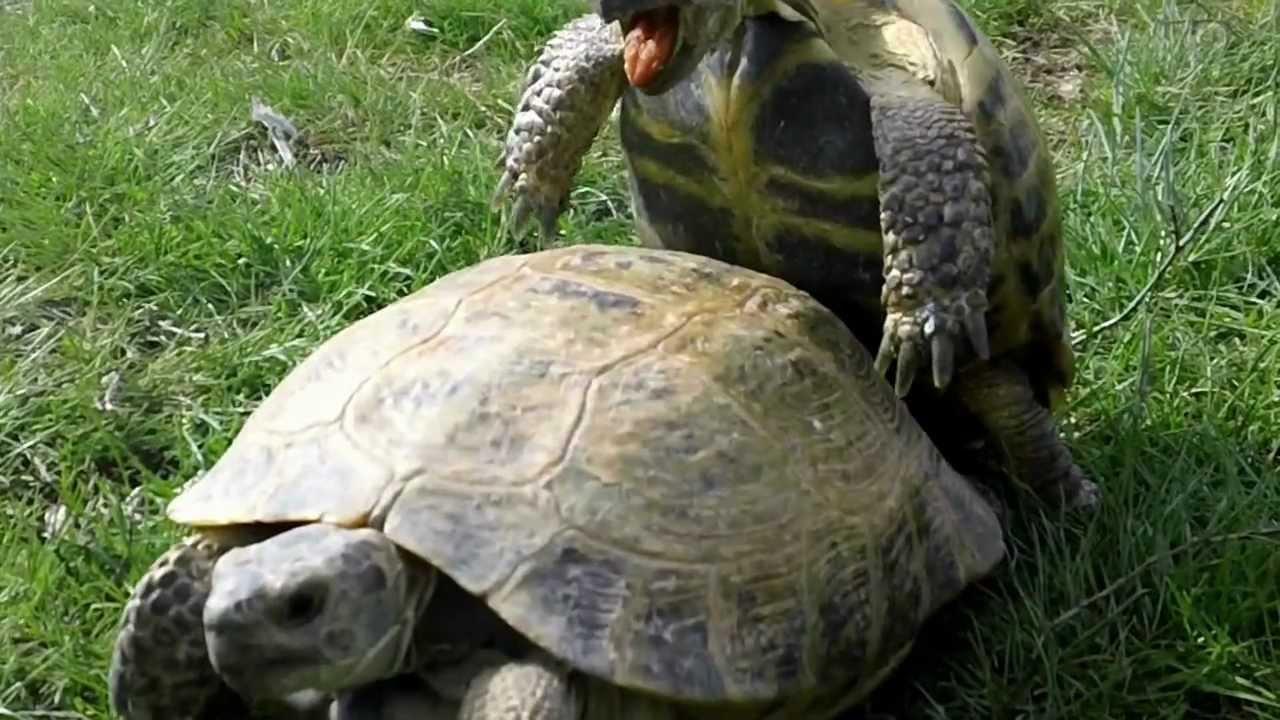 картинки про черепах