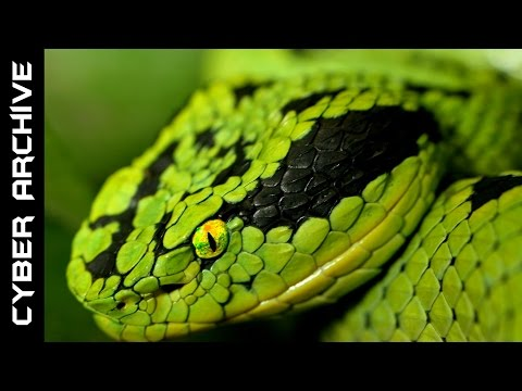 Thumbnail: 15 Most Venomous Snakes in the World