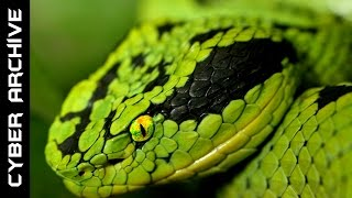 15 Most Venomous Snakes in the World